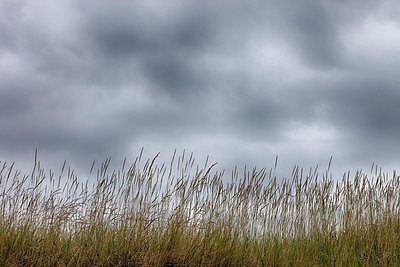 Beach grass - p253m881156 by Oscar