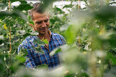 Mature farmer working in organic farm - p300m2286597 by Manu Padilla Photo