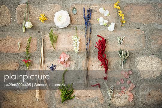 p429m2004495 von Senserini Lucrezia
