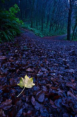 Helles Blautt im dunklen Wald - p1562m2161165 von chinch gryniewicz