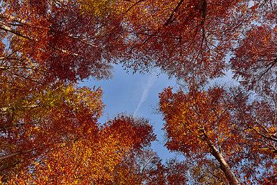 Herbst 6 - p587m1466525 von Spitta + Hellwig