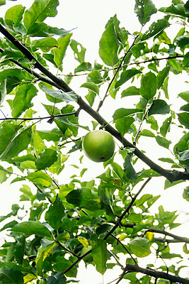 Green apple - p879m2054872 by nico