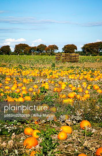 Pumpkin patch - p382m2283269 by Anna Matzen