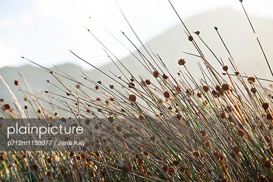 Gräser im Wind  - p712m1159977 von Jana Kay