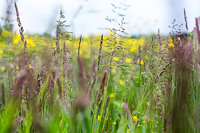 Variety of plants in meadow - p1057m1041401 by Stephen Shepherd