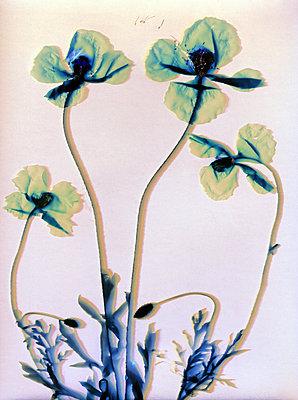 Gepresste Blumen - p945m2278998 von aurelia frey