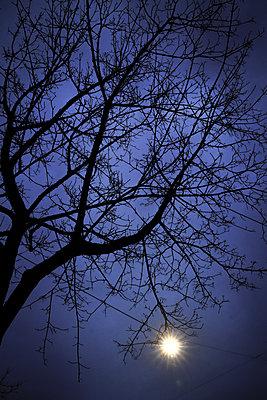Licht - p954m1558983 von Heidi Mayer