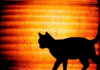 Die Katze - p4500175 von Hanka Steidle
