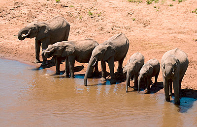 Watering hole - p5330116 by Böhm Monika