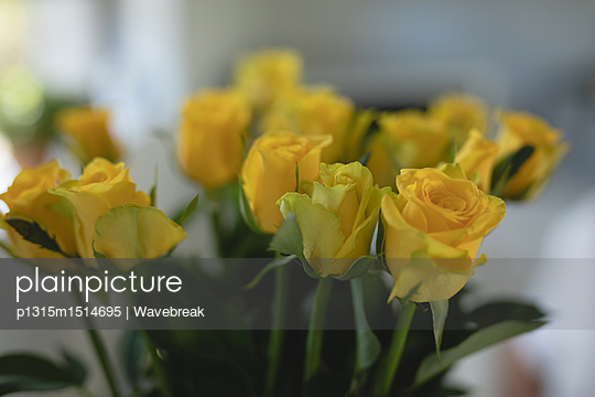 plainpicture | Photo library for authentic images - plainpicture p1315m1514695 - Close-up of yellow flower - plainpicture/Wavebreak
