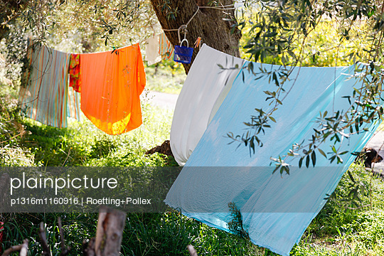 Wäscheleinen mit Wäsche an einem Olivenbaum, Cottage Casa Zisola, Noto, Syrakus, Sizilien, Italien - p1316m1160916 von Roetting+Pollex