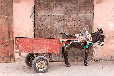 Morocco, Marrakesh, donkey with trailer - p300m1029057f by Heike Skamper