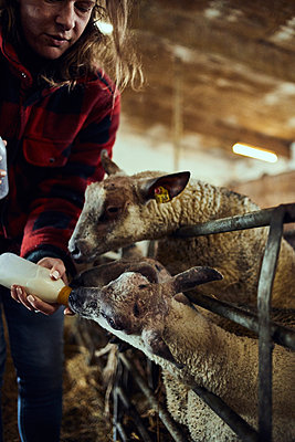 Feeding lambs with a milk bottle - p1573m2272553 by Christian Bendel