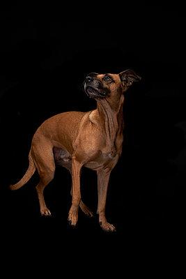 Hund - p587m1466500 von Spitta + Hellwig