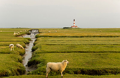 Sheep and lighthouse - p162m886484 by Beate Bussenius