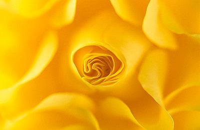 Blüte - p3300535 von Harald Braun