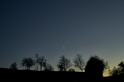 Germany, Trees in the dusk - p1312m2228796 by Axel Killian