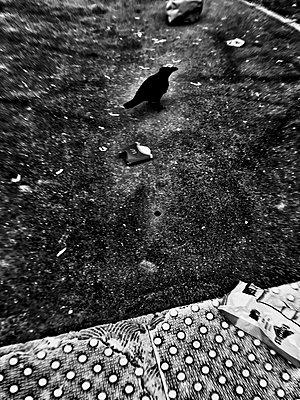 Frankreich, Eine Krähe in Paris - p1189m2263825 von Adnan Arnaout