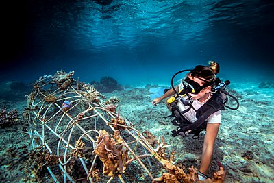 Underwater view of diver fixing a seacrete on seabed, (artificial steel reef with electric current), Lombok, Indonesia - p429m1062141f by Steve Woods Photography