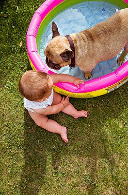 Baby beobachten Hund am Planschbecken - p432m2020253 von mia takahara