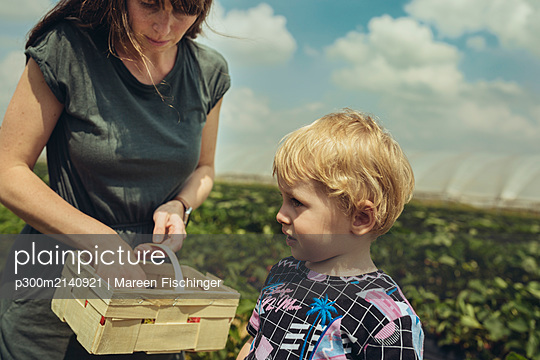 Mother and son picking strawberries in strawberry plantation - p300m2140921 by Mareen Fischinger