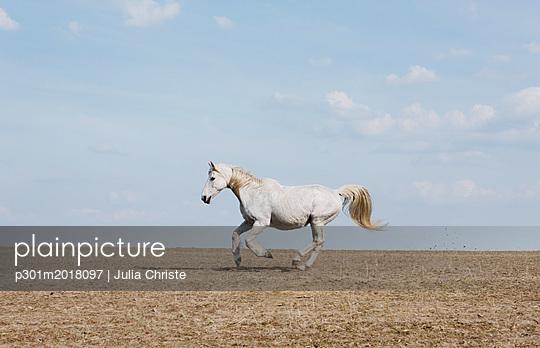 p301m2018097 von Julia Christe
