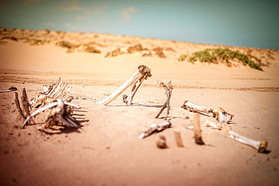 Skeleton of dead camel in the desert - p1007m1144437 by Tilby Vattard