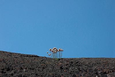 Karst landscape - p451m815471 by Anja Weber-Decker