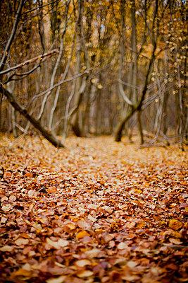 Herbst - p9460005 von Maren Becker