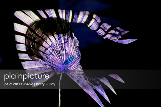 Palmblattprojektion auf Frauengesicht - p1212m1123452 von harry + lidy