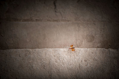 Butterfly on a stone step - p1007m1144365 by Tilby Vattard