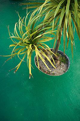 Palm tree on green boardwalk - p1312m1222427 by Axel Killian