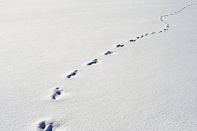 Dem Hasen auf der Spur  - p3540133 von Andreas Süss