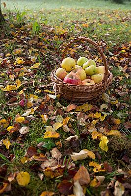Herbsttage - p454m764415 von Lubitz + Dorner