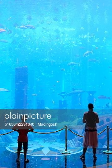 Visitors in a marine aquarium - p1638m2291840 by Macingosh