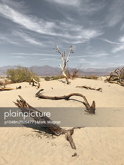 Dead wood in the sand in Death Valley, USA - p1048m2025477 by Mark Wagner