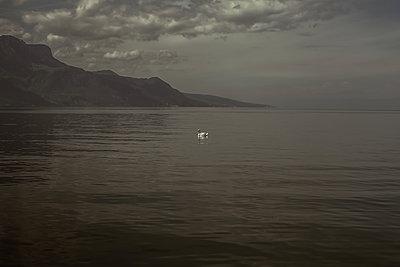 Schwan in einer Bucht - p750m1137944 von Silveri
