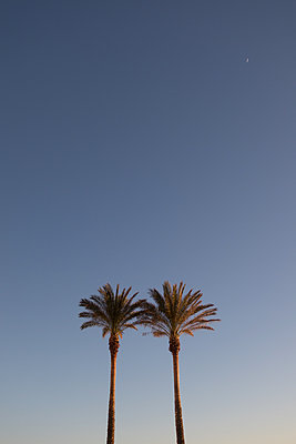 Two palms against blue sky - p930m1222009 by Ignatio Bravo