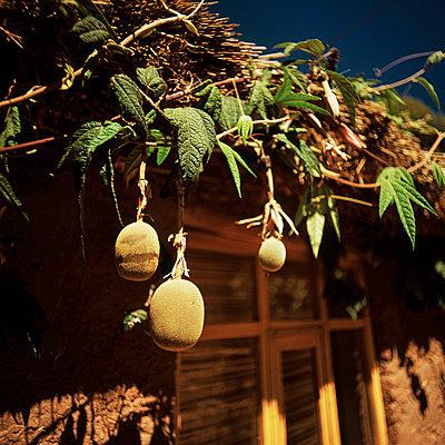 Kiwi and hut in Peru - p8440070 by Markus Renner