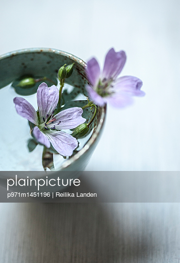 Forest flowers in bowl - p971m1451196 by Reilika Landen