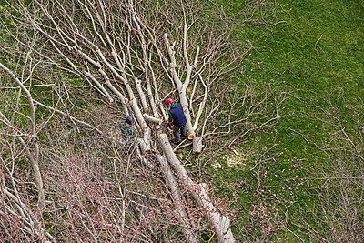Felling trees - p1291m2122065 by Marcus Bastel