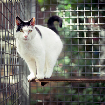 White cat in an animal shelter, Amsterdam, the Netherlands - p8960880 by Judith Dekker