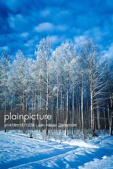 Verschneiter Wald - p1418m1571278 von Jan Håkan Dahlström
