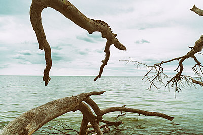 Uprooted trunk at Jasmund National Park - p1332m1445749 by Tamboly