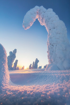 Shapes of frozen trees, Riisitunturi National Park, Posio, Lapland, Finland - p651m2033206 by Roberto Moiola