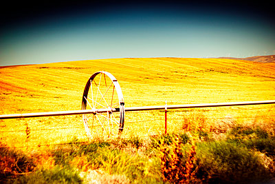 Agricultural Sprinkler in Golden  Field  - p694m2218857 by Justin Hill photography