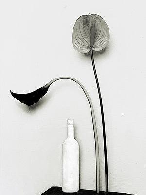 Black and white flowers - p1413m2065487 by Pupa Neumann