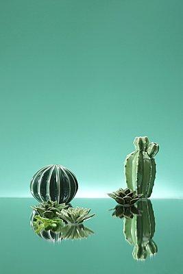 Kakteen aus Porzellan vor grünem Hintergrund - p237m1461363 von Thordis Rüggeberg