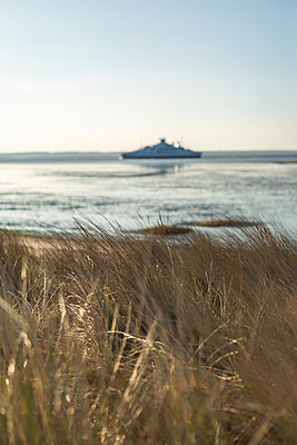 Denmark, Romo, Close-up of coastal grass with ferry in background - p300m2273628 by Anke Scheibe