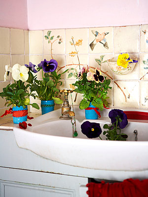 Pansies beside washbasin in Isle of Wight home;  UK - p349m920101 by Rachel Whiting